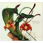 Botanist_-_IV-_Flora_1404393456